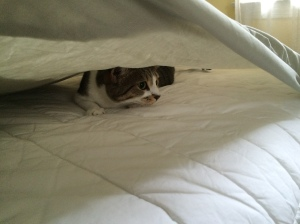 Jazzy under the sheets