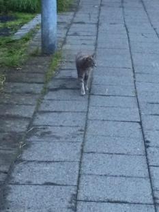 Gray cat 2