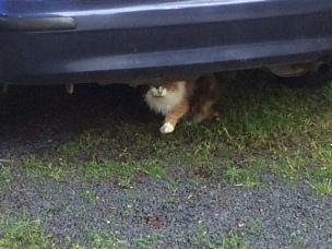 Under car cat